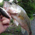 rattlebass - Realistic Fishing