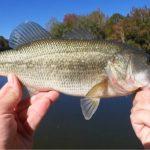 15fallbass - Realistic Fishing