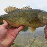 basslucky - Realistic Fishing