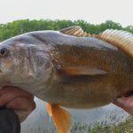 beastdrum - Realistic Fishing