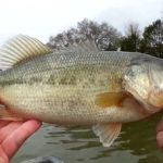 hardbass - Realistic Fishing
