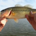 jboatbass2 - Realistic Fishing