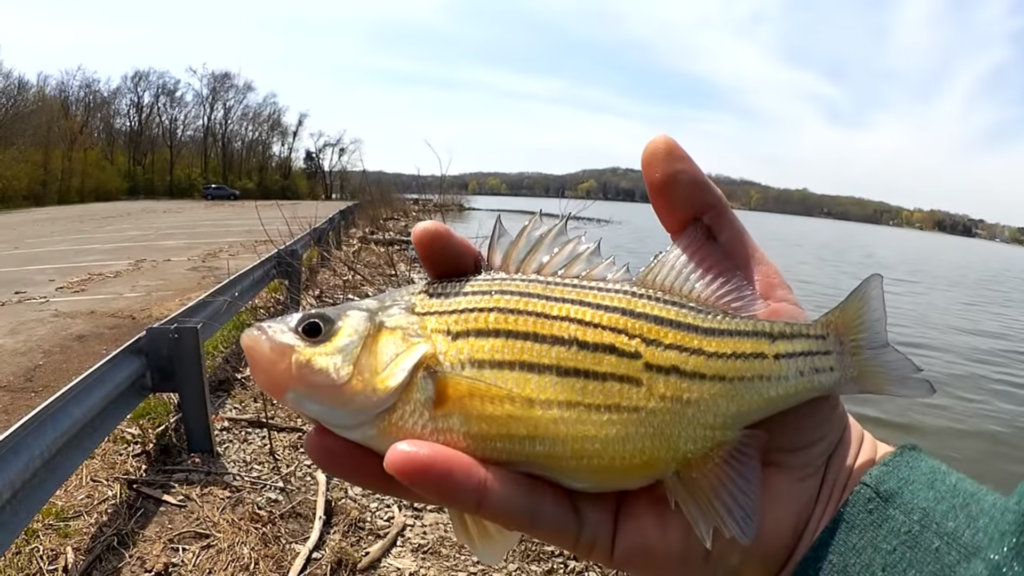 Beginner Fishing Lures! How to Fish with a Twister Tail Grub