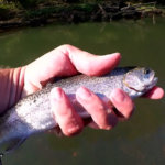 River Fishing for Trout Using Bottom Rigs