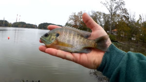 easy bank fishing rigs for beginners - Realistic Fishing