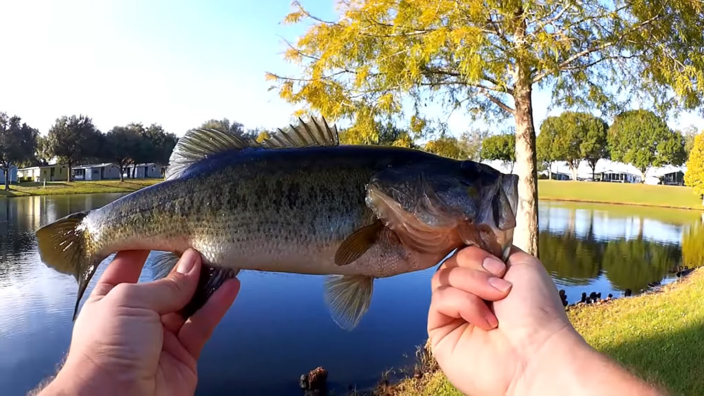 first pond fishing video on realistic fishing bass fishing new pond - Realistic Fishing