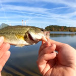 fishing for fall bass bluegill with blade bait and live bait worms - Realistic Fishing
