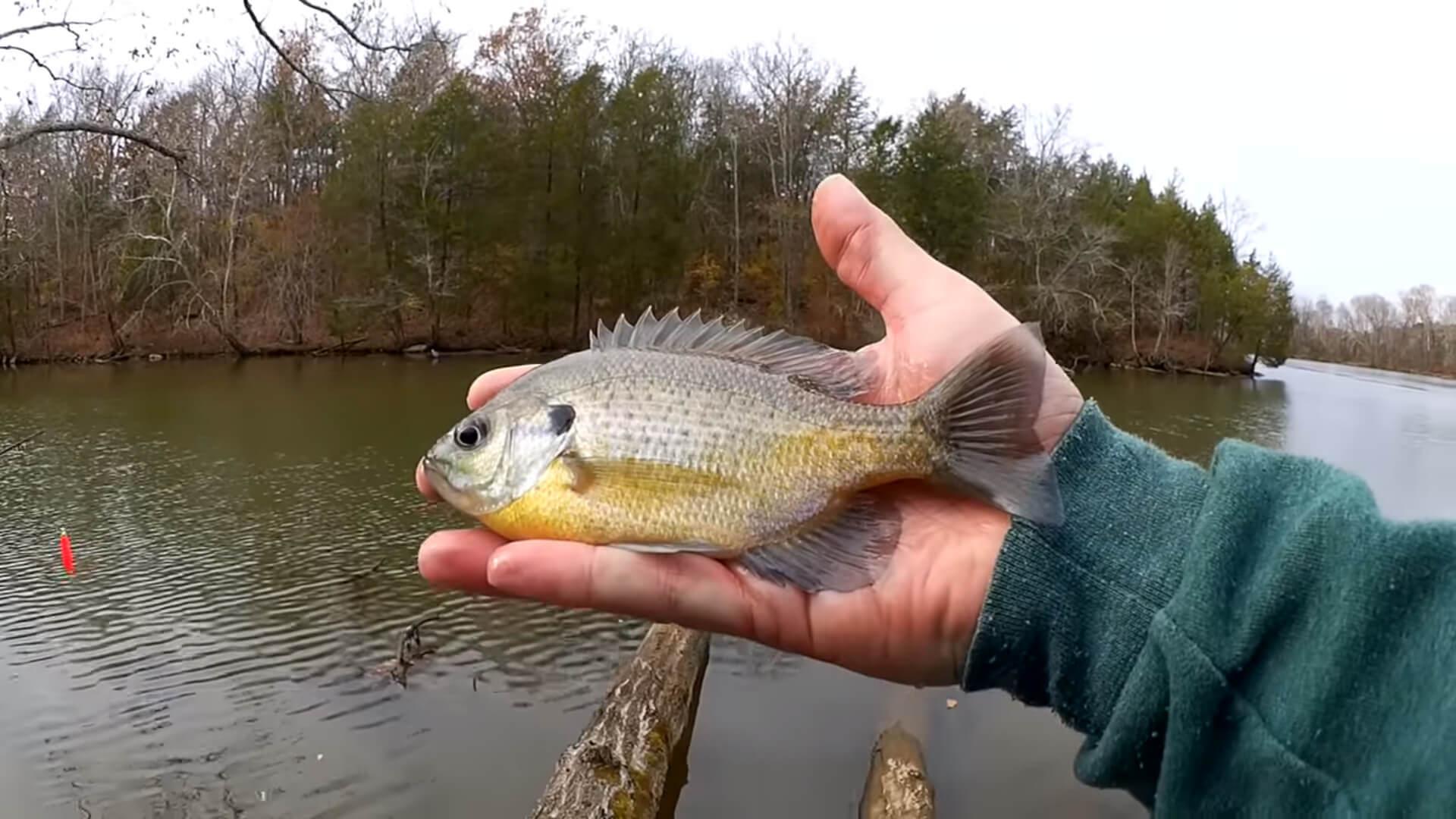Gulp Minnow vs PowerBait Honey Worm - Realistic Fishing