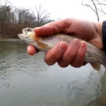 trout fishing with three different baits - Realistic Fishing
