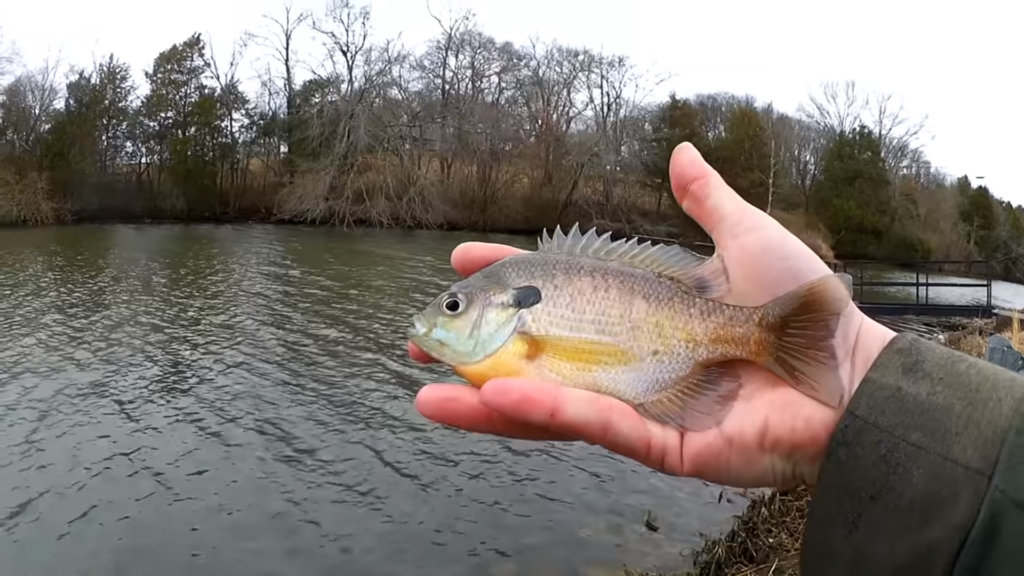 can you catch fish from the bank in winter - Realistic Fishing