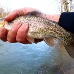 do trout like powerbait honey worms - Realistic Fishing