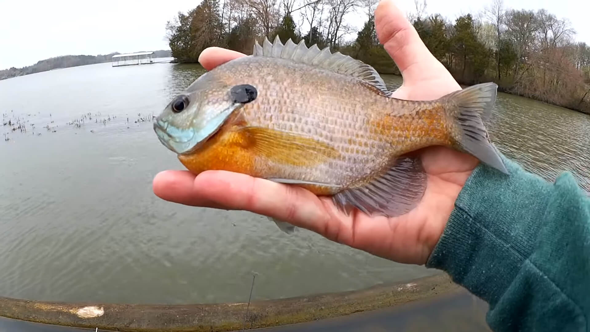 How to Catch Big Bluegill on Crappie Nibbles Beginner Level Fishing - Realistic Fishing