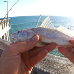 Pier Fishing for Beginners Easy Fishing at the Gulf State Park Pier - Realistic Fishing