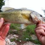 Original PowerBait Catches Bass When I Cant Get Fish to Bite - Realistic Fishing