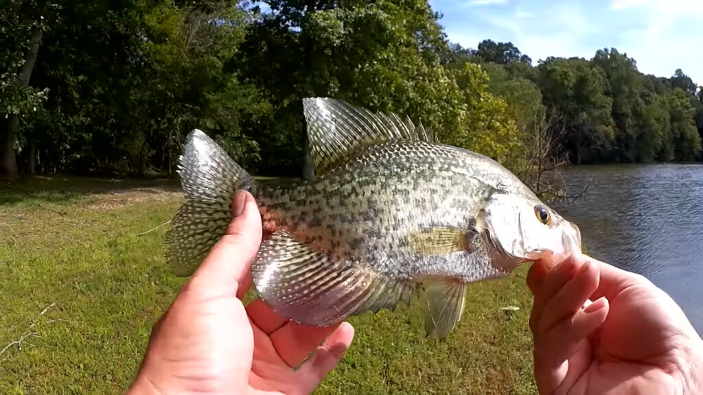How to Find Fish at a New Lake Bluegill and Crappie Fishing - Realistic Fishing