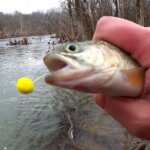 Stocked Trout Fishing Tips for Beginners How to Catch Stocked Trout - Realistic Fishing