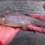 Trout Fishing from the Bank with Worms Nightcrawlers and PowerBait - Realistic Fishing