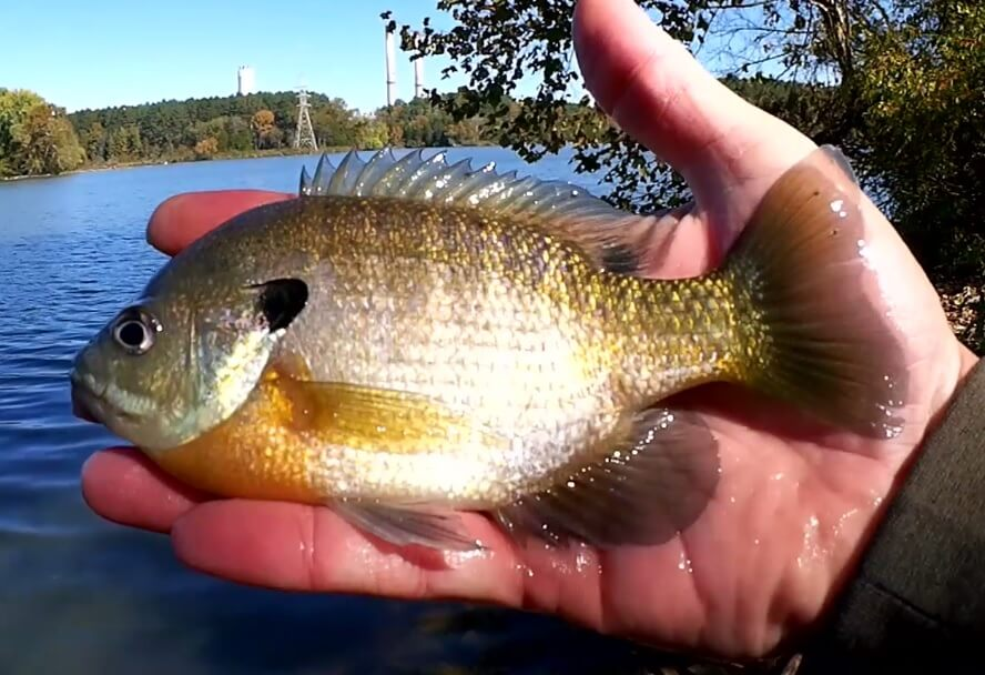 Easy Way to Catch Fish Without a Float Fishing with a Realistic Rig - Realistic Fishing