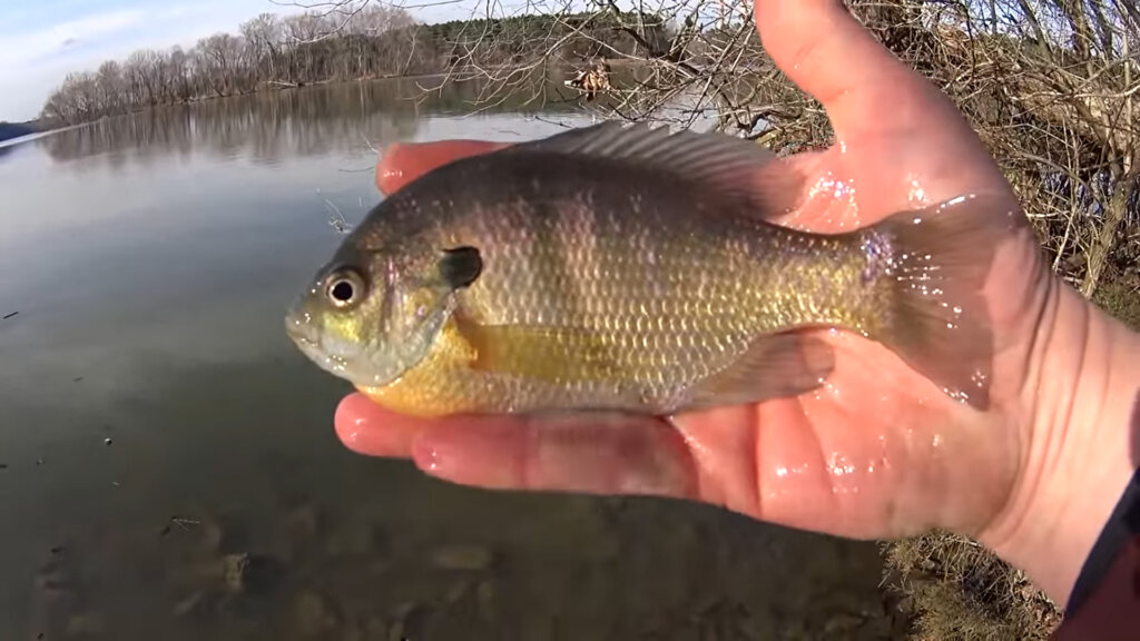 I Cant Wait for that Spring Bass Fishing Realistic Winter Fishing - Realistic Fishing