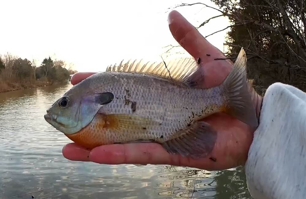 Fishing for Bass and Bluegill at the Park Bass Season is Starting - Realistic Fishing
