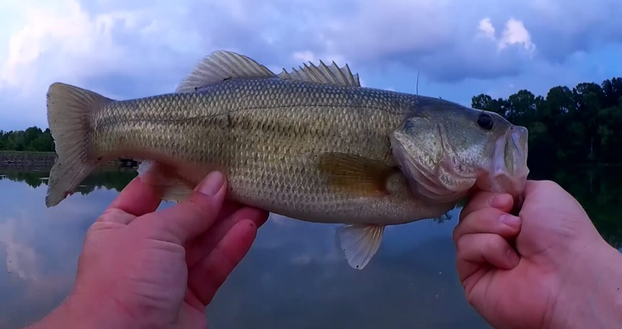 Realistic Bass Fishing with Topwater Lures Best Time To Catch Bass - Realistic Fishing