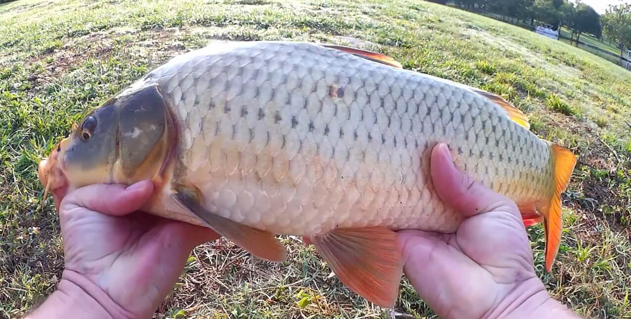 Realistic Fishing Gone Wrong Surprise Catches When Fishing for Bass - Realistic Fishing