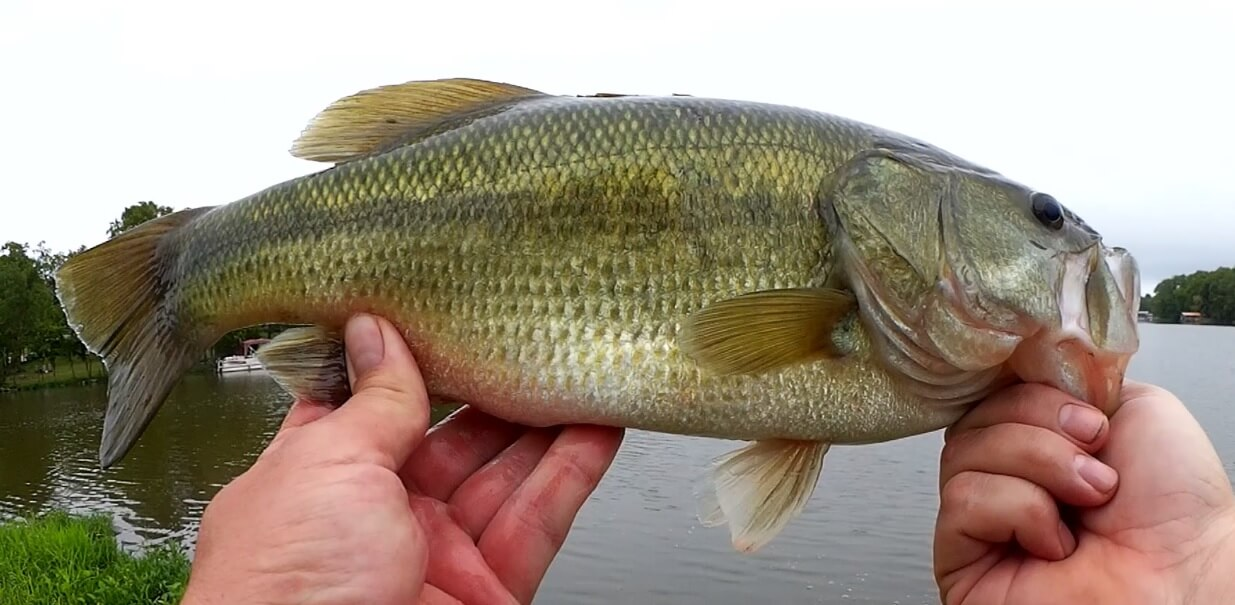 The Only Lure Catching Bass Right Now Realistic Topwater Bass Fishing - Realistic Fishing